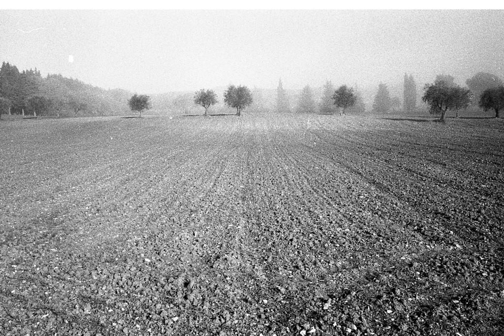 campo-arato