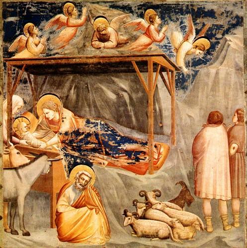 Giotto natività