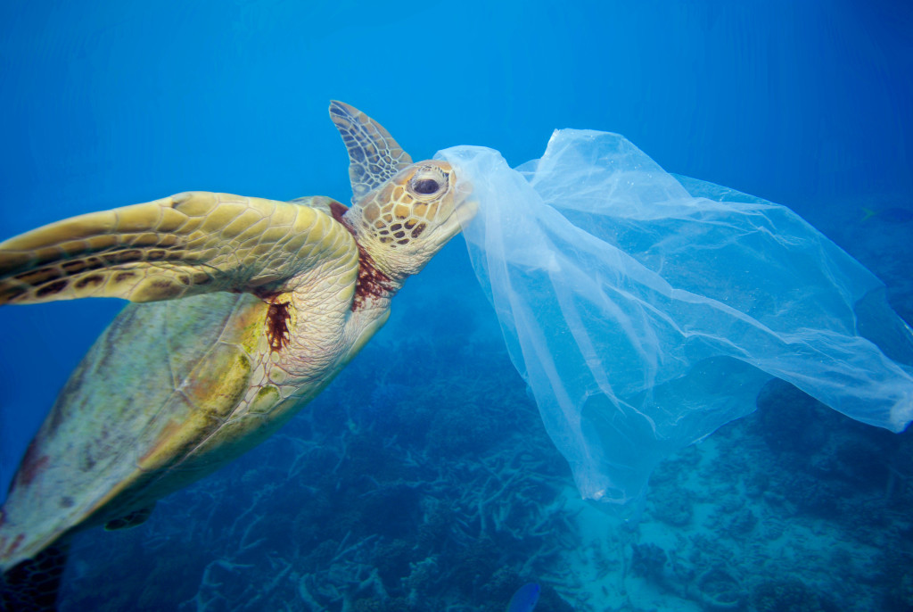 Underwater image of a turtle with plastic on his head.
