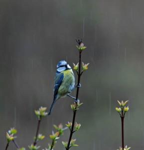 la-pioggia-di-marzo