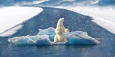 orso-polare-cambiamenti-climatici
