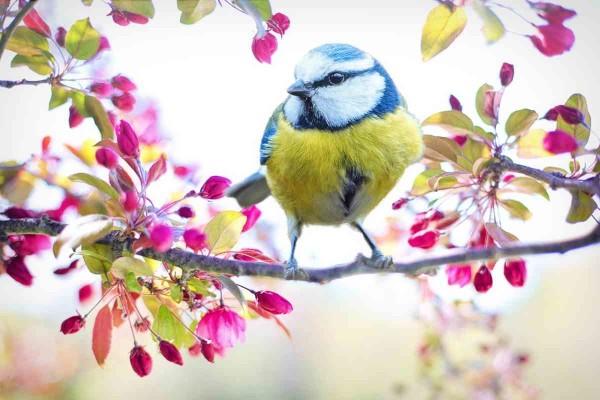 uccellino-speranza