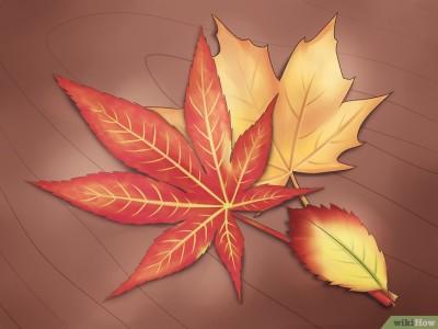 foglie-dautunno