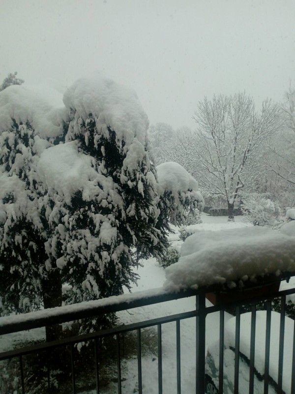 foto nevicataFoto da Diana Catellani (1)